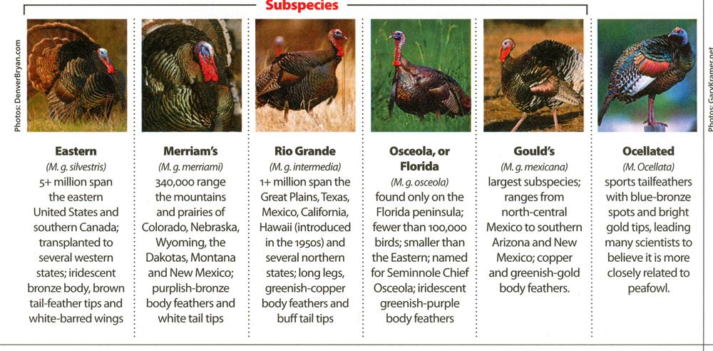 South Dakota Turkey Hunting