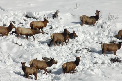 Wildlife face starvation in periods of extreme weather. Photo by CPW.