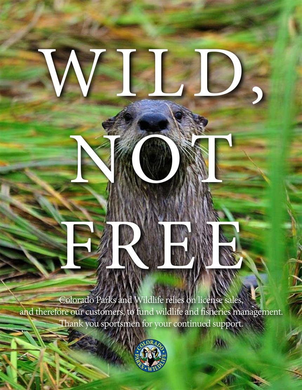 Wild Not Free Otter (1)