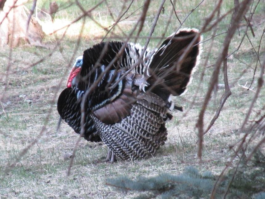 4San Juans-Turkey Hunt-Apr16-DLien Photos (5)