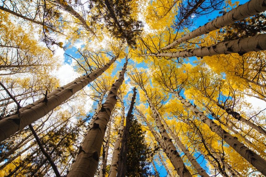 state-forest-fall-delliveneri-1